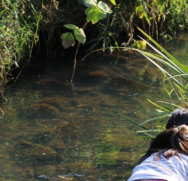 秋の小川でガサガサ!