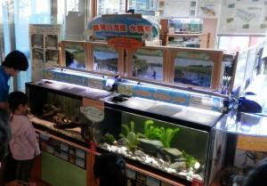 鶴見川流域水族館