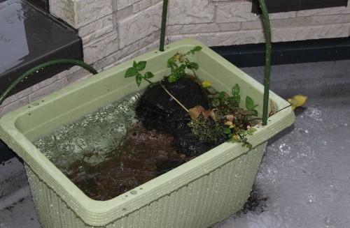 雨のビオトープ