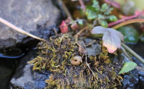 腐りかけの苔