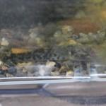 ヨシノボリのケース近況