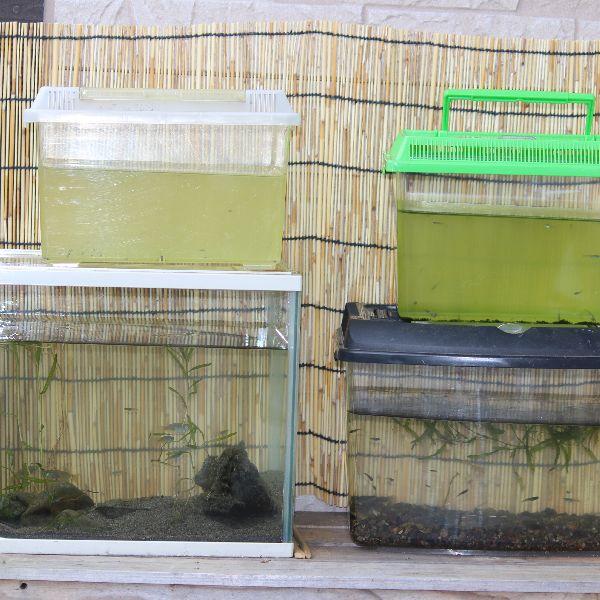 夏の水槽大掃除