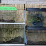 真夏の水槽掃除(超今更記事更新)
