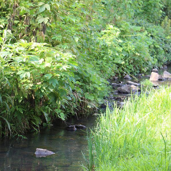 今夏初の川遊び